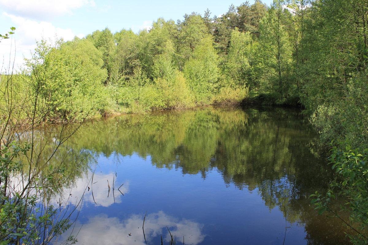 лесной водоем - Александр Жукович