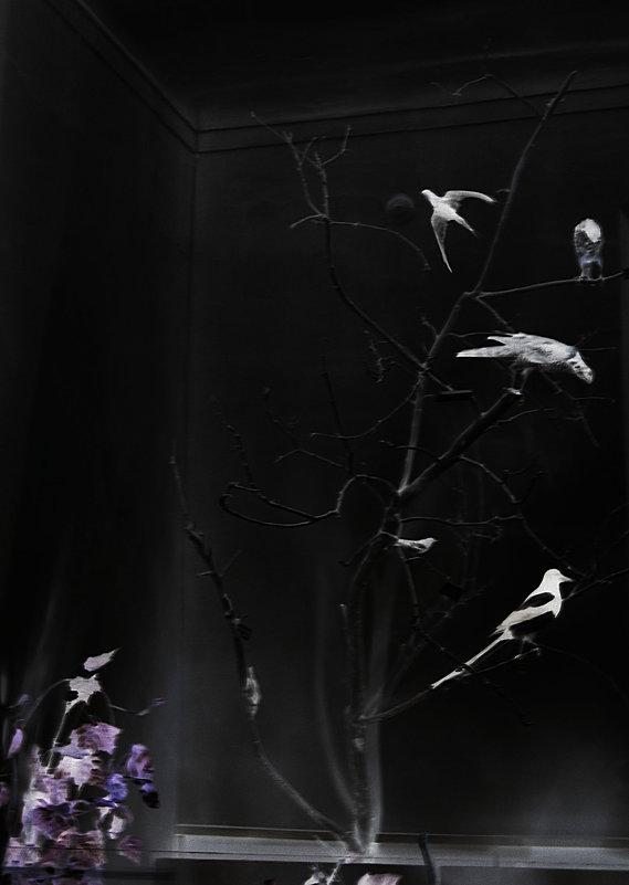 птицы - Юлия Денискина