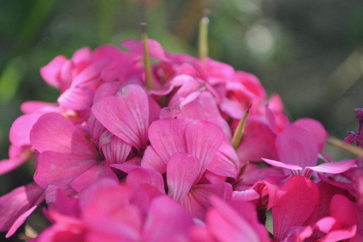 цветочки - Марина Титкова