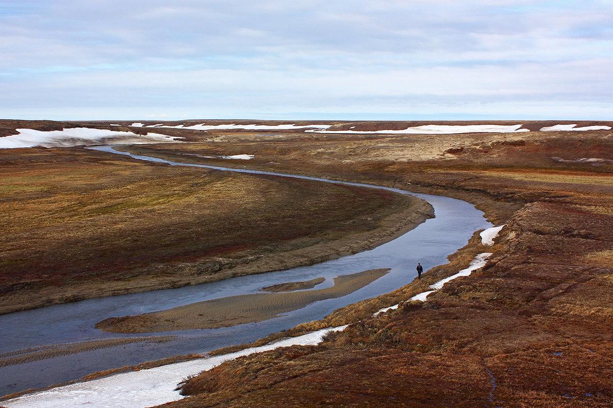 Арктическая тундра - Леонид Сергиенко