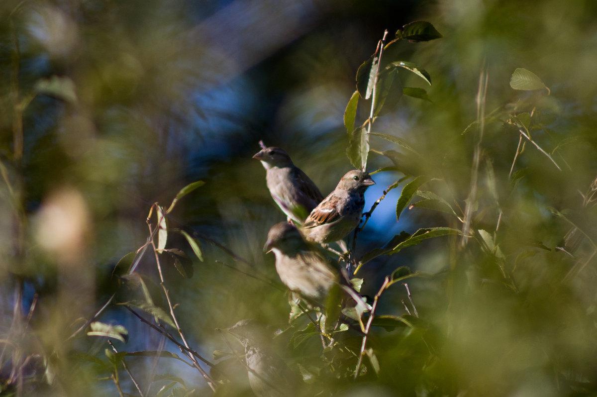 птицы - Евгений