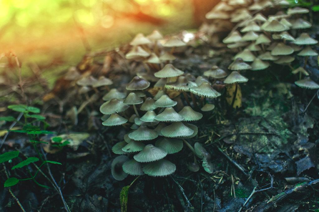 по грибы - Тася Тыжфотографиня