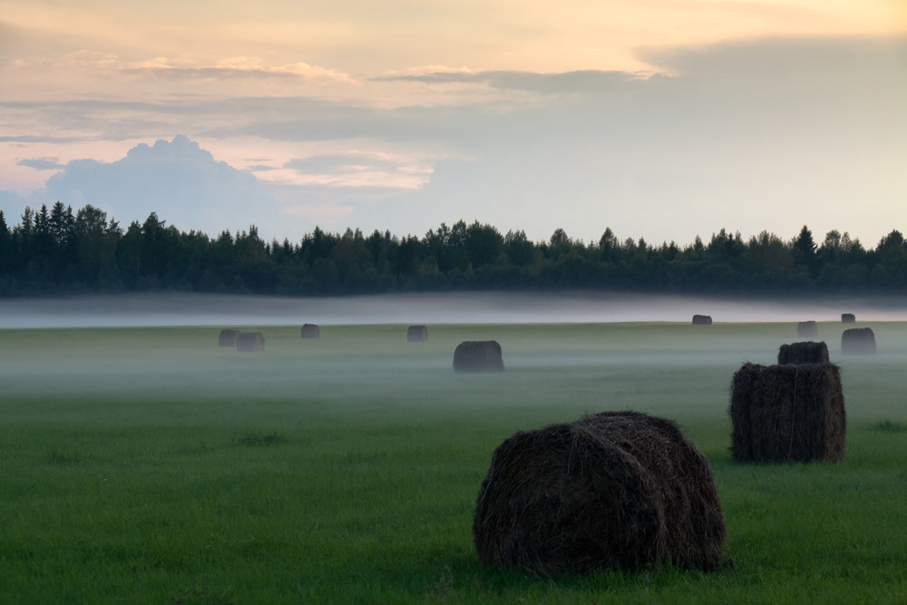 Поле туман, вечер, - Владимир Миронов