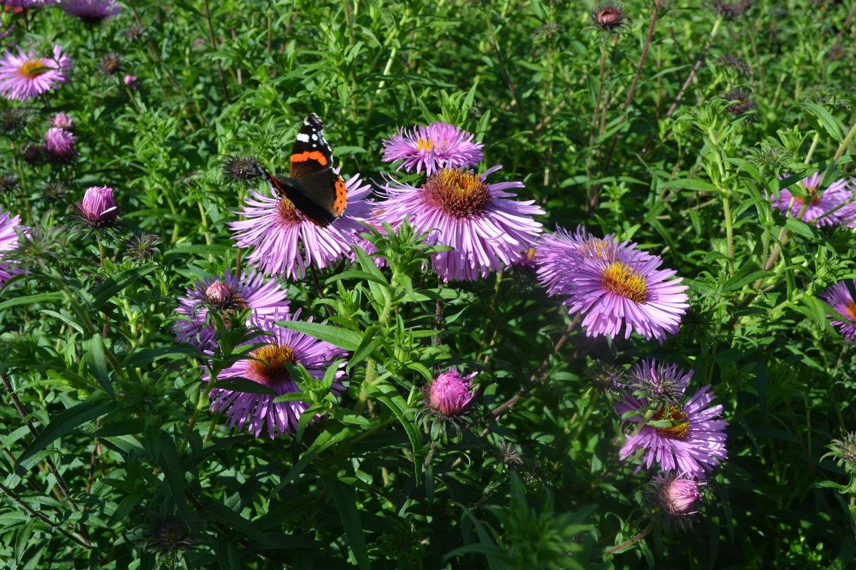 Бабочка на цветах. - zoja