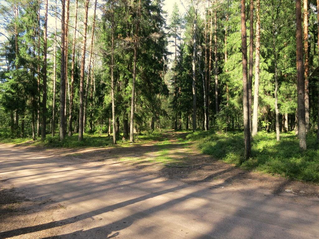 В лесу. - Валентина Жукова