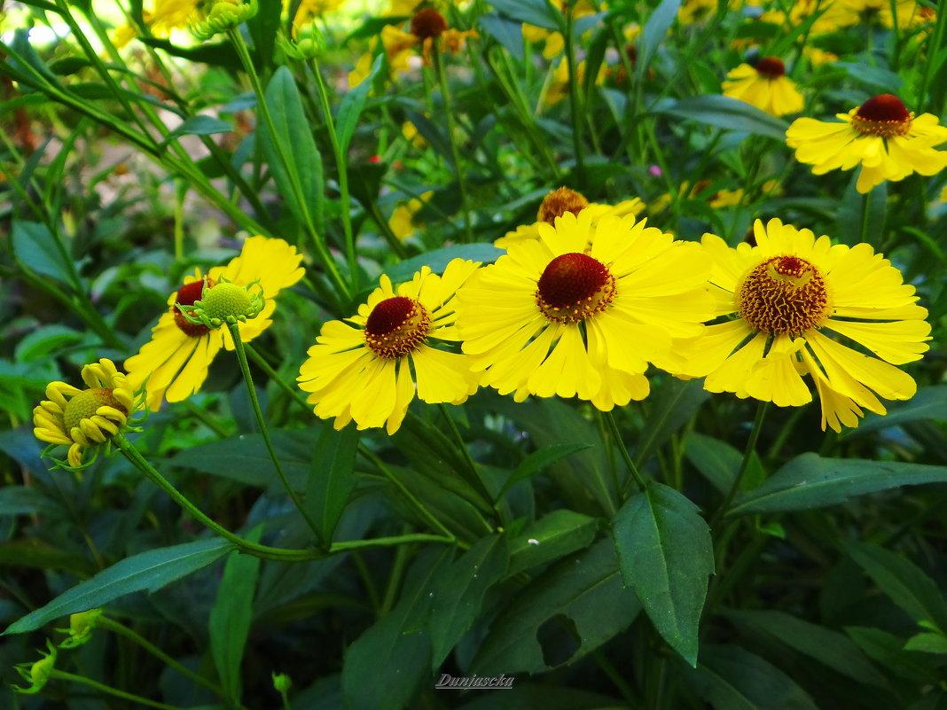 Яркие краски уходящего лета... - Антонина Гугаева