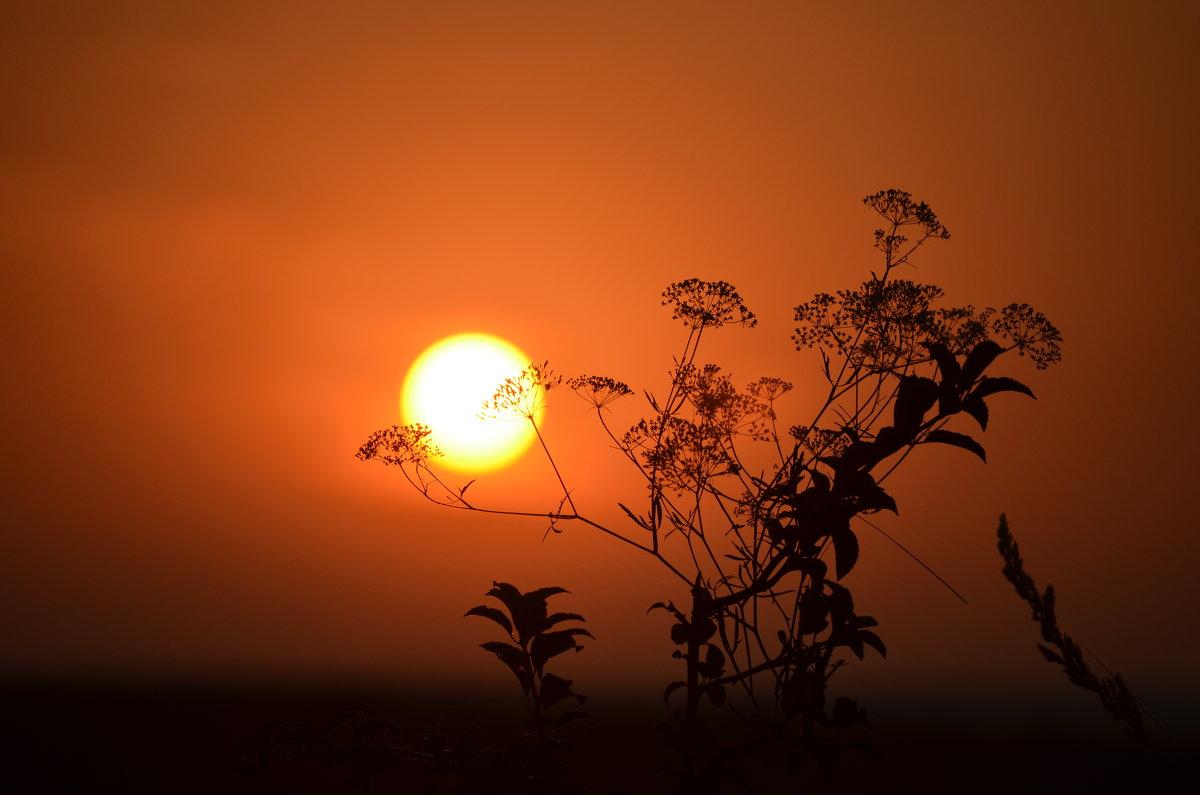 На закате - Marina Timoveewa
