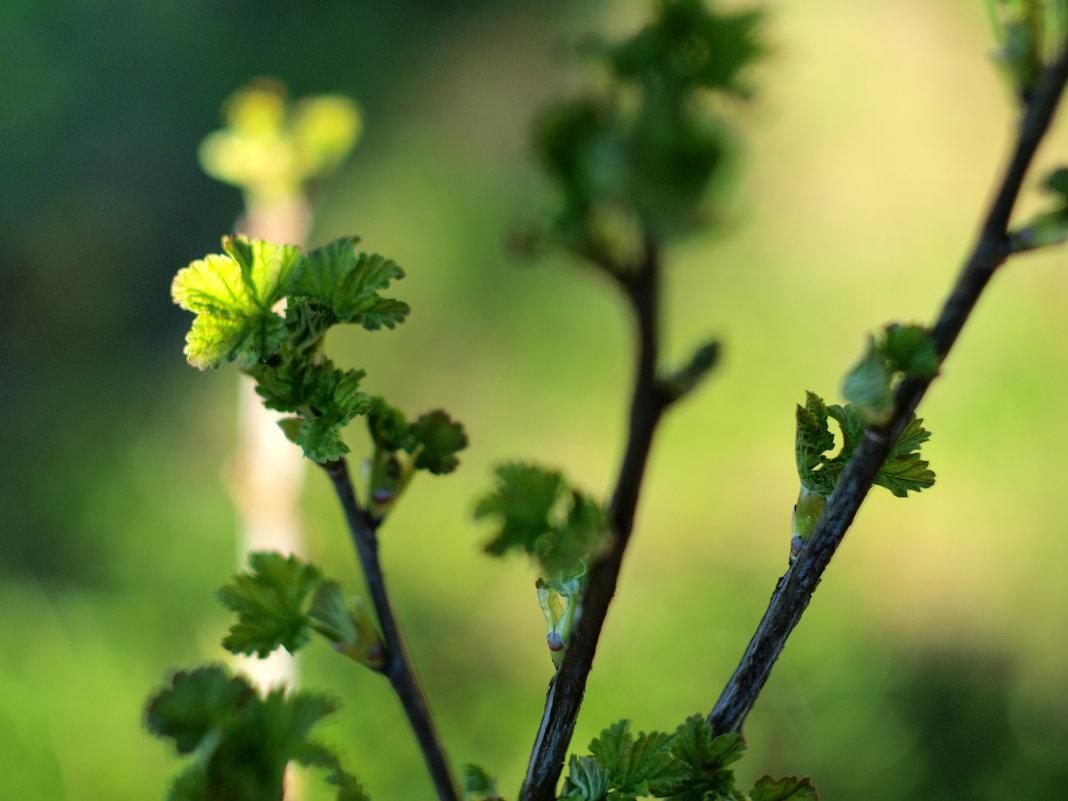 Весна - Андрей Иванов