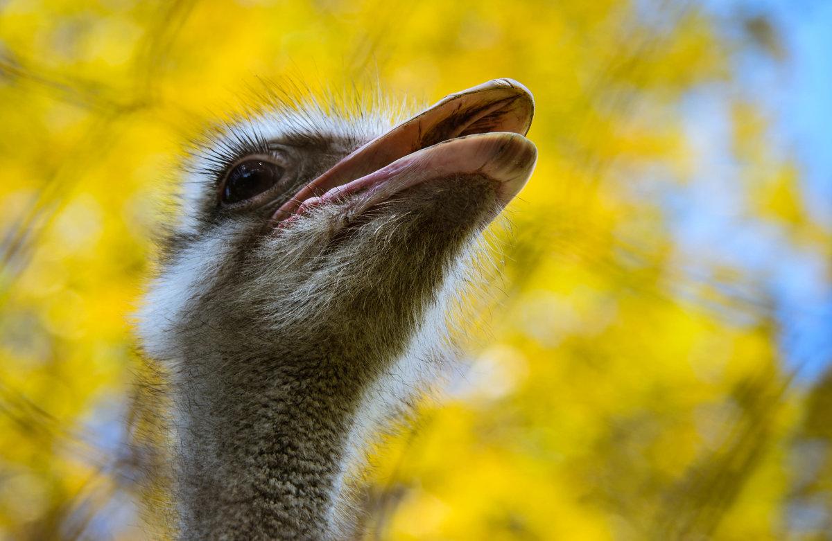 Гордый птиц - cfysx