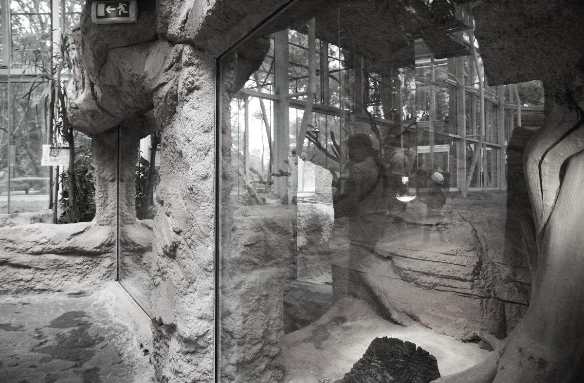 Зоопарк на Пальмире - Елена Мартынова