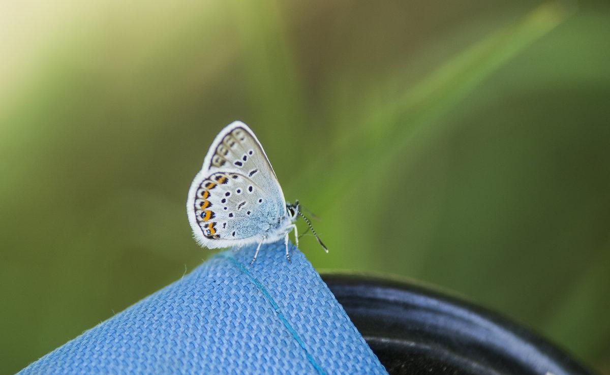 Бабочка - Георгий Морозов