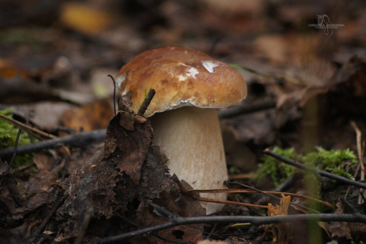 Белый гриб - Кристина Плавская