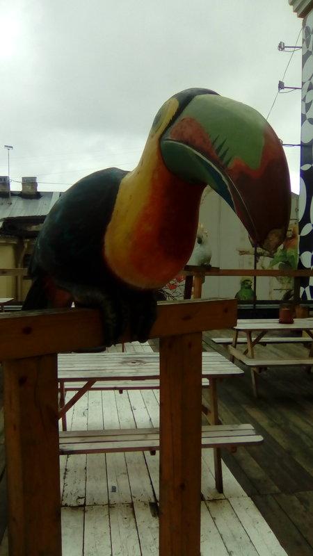 Расписная птица на петербургской крыше. - Светлана Калмыкова