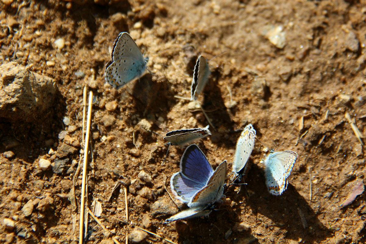 Бабочкины посиделки - Светлана Попова