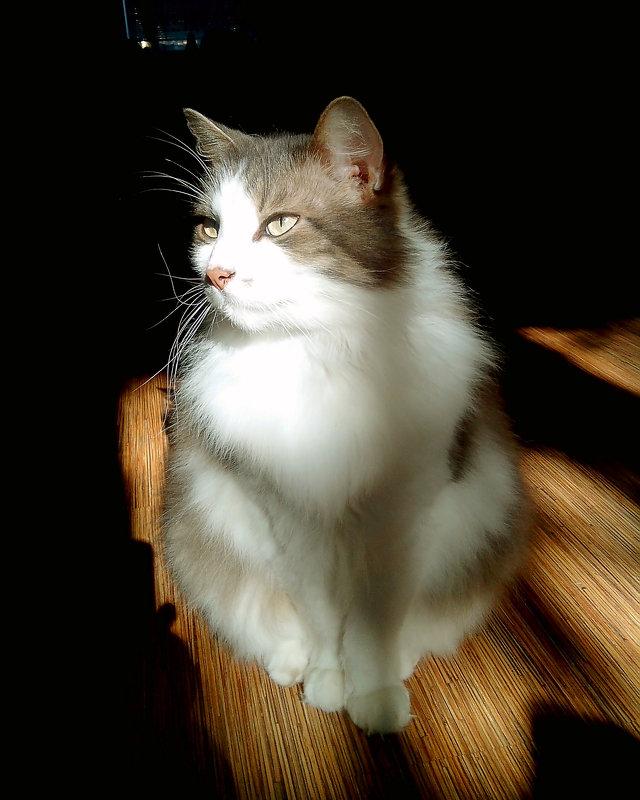 Солнечный кот.. - Анна Приходько