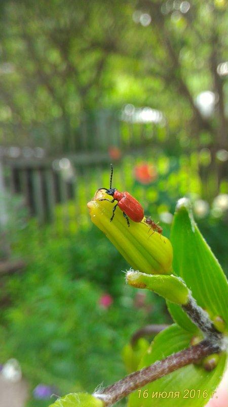 жук + муравей - Александр 6769