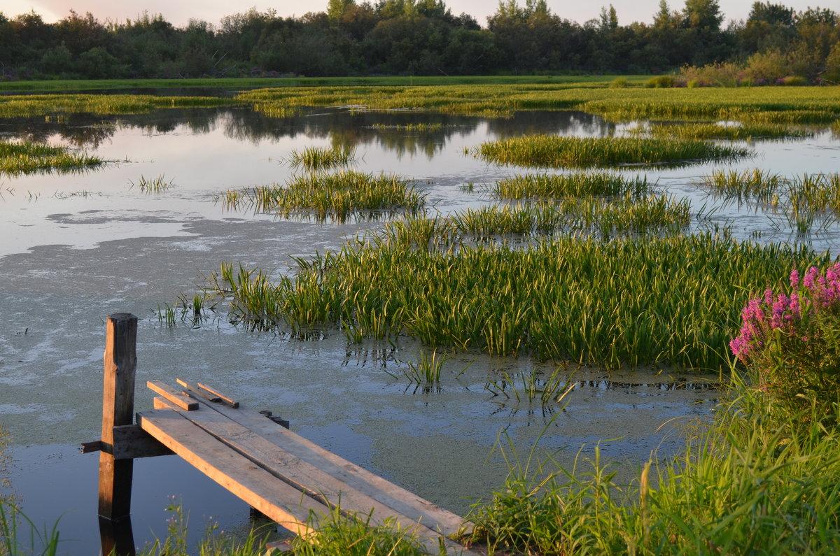 На озере - Вера Андреева