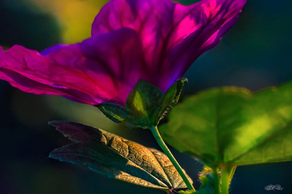 Закатный свет - Владимир Шамота