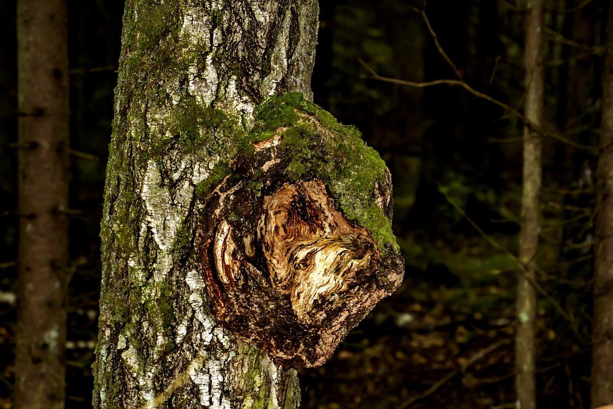 Смотрящий над лесом. - Анатолий. Chesnavik.
