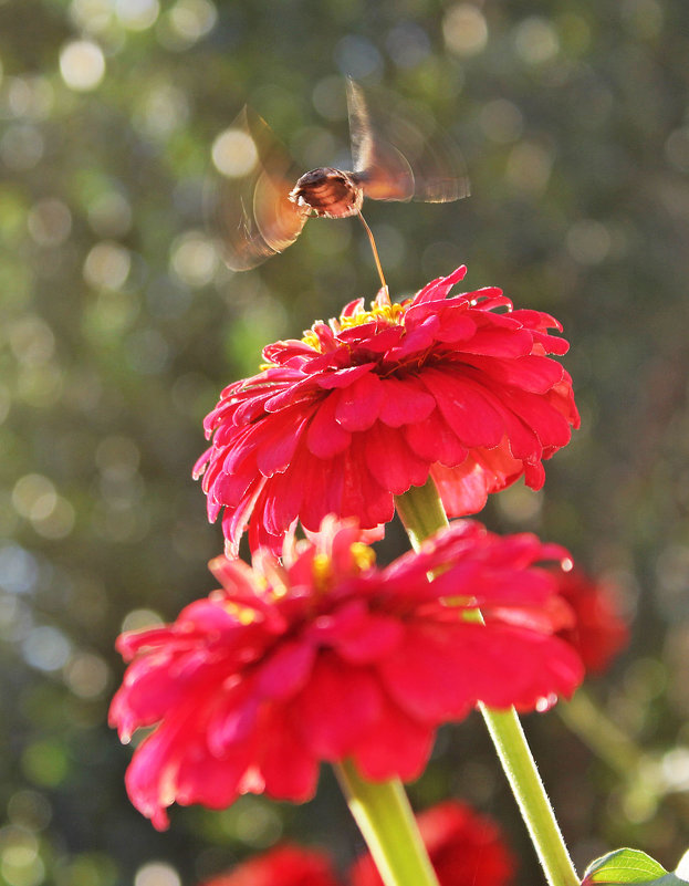 Бабочки и цветы - TATYANA PODYMA
