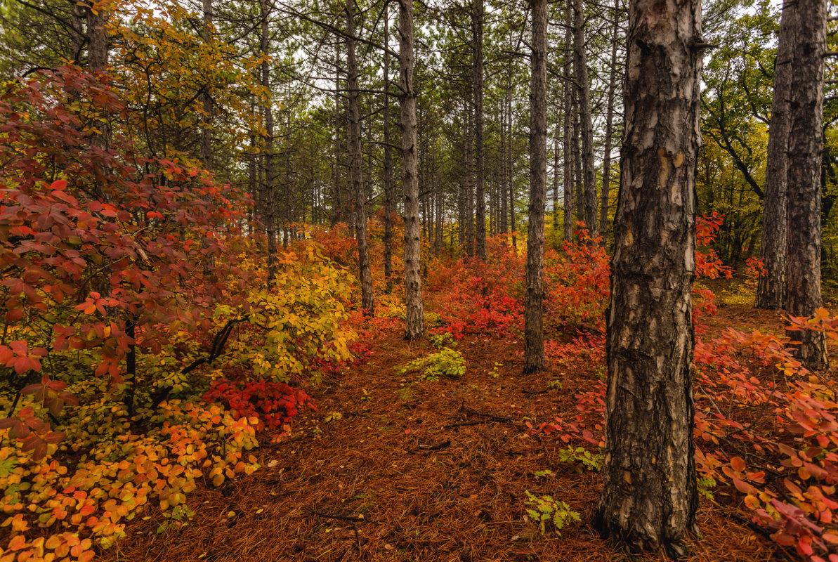 Чем дальше в лес.... - Владимир Колесников