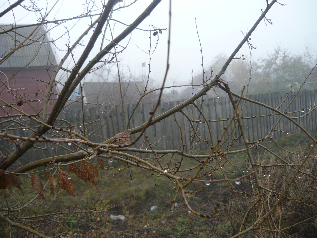 туман вблизи - tgtyjdrf