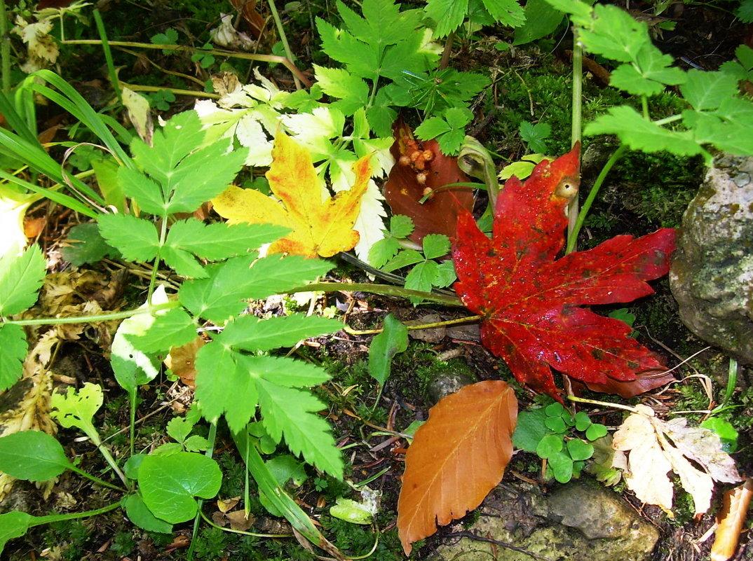 Осень в лесу - татьяна