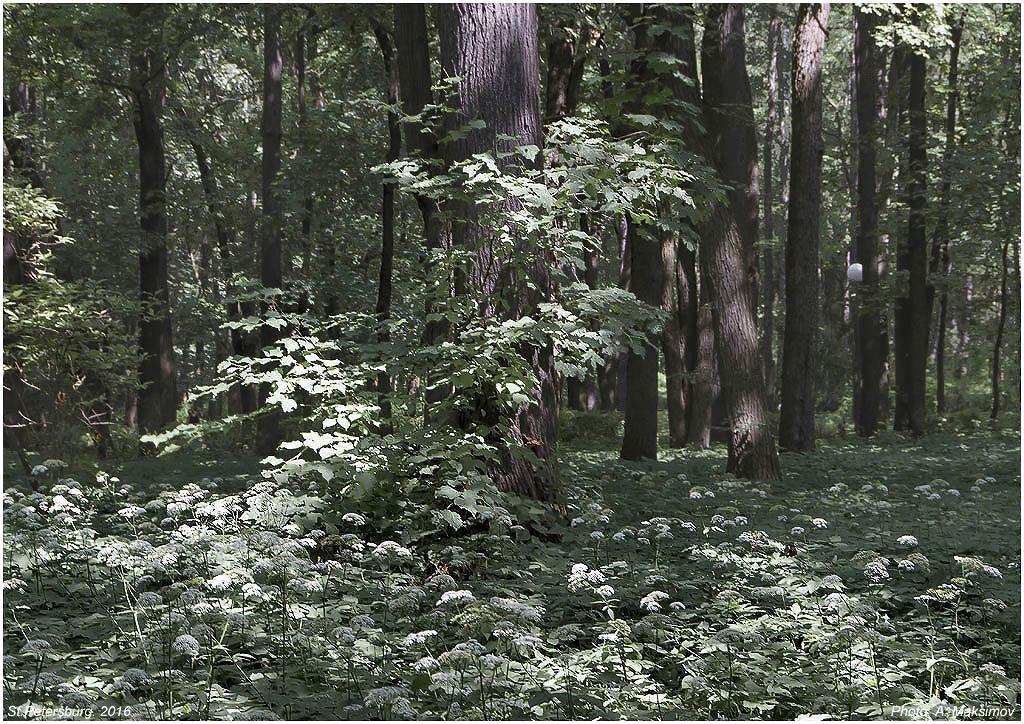 В парке. Дерево освещенное солнцем - Александр Максимов
