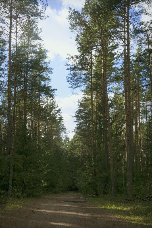 В лесу - Aнна Зарубина