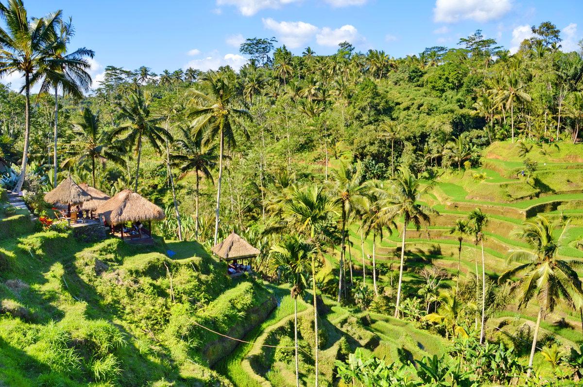 Рисовые поля на Бали - Demian