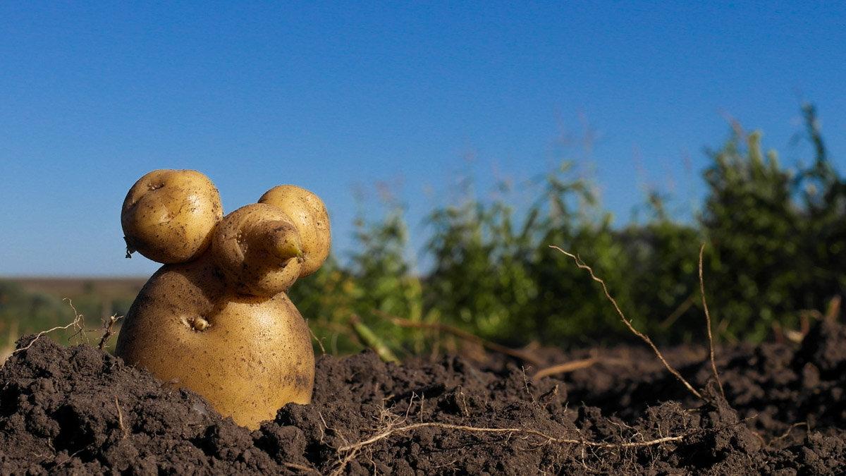 Картофельная мышь - Денис Антонов