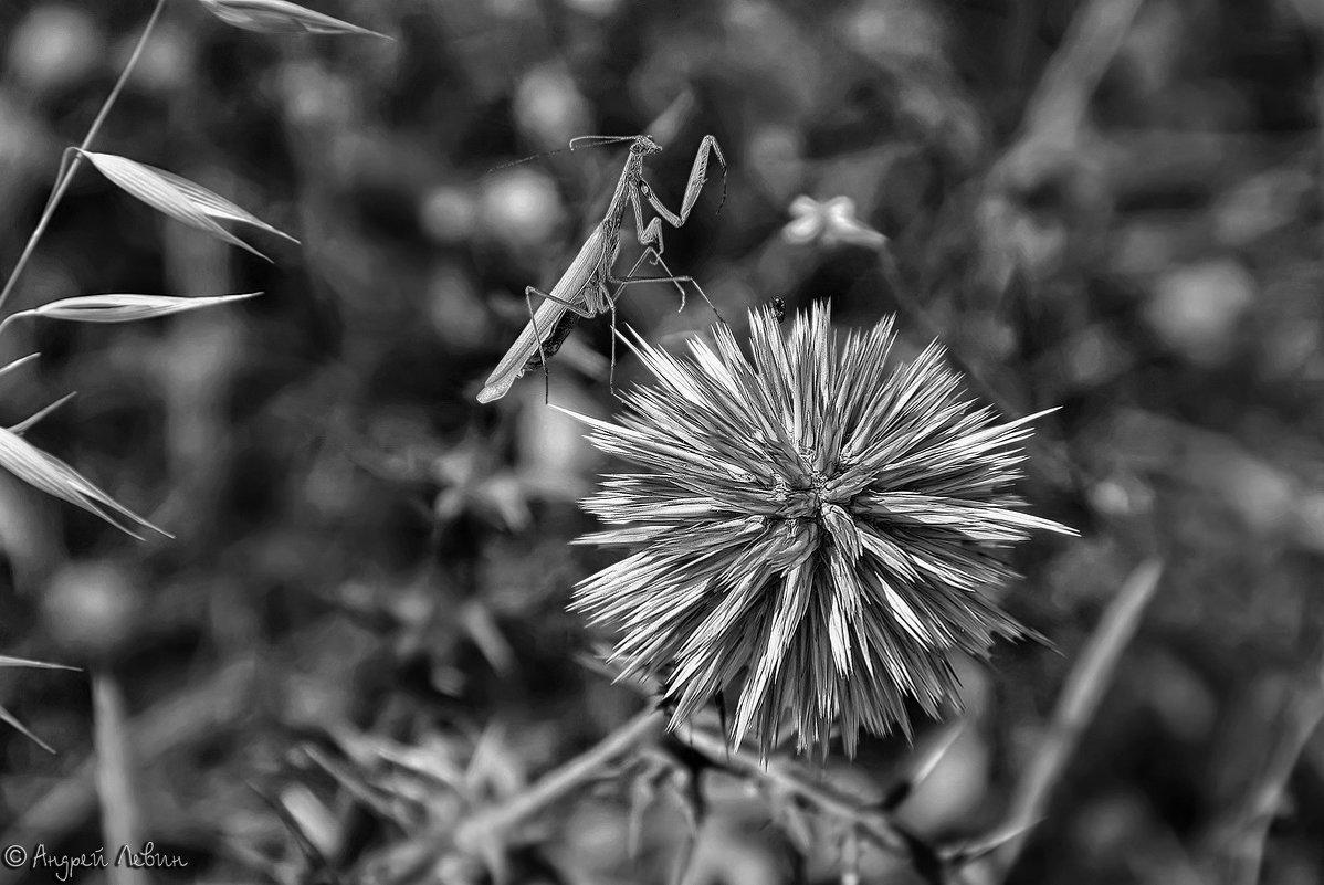 Черно-белая охота богомола - Андрей Левин