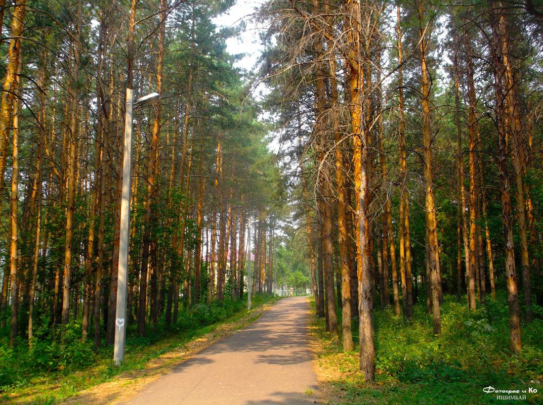 Трасса в лесу - Вячеслав Баширов