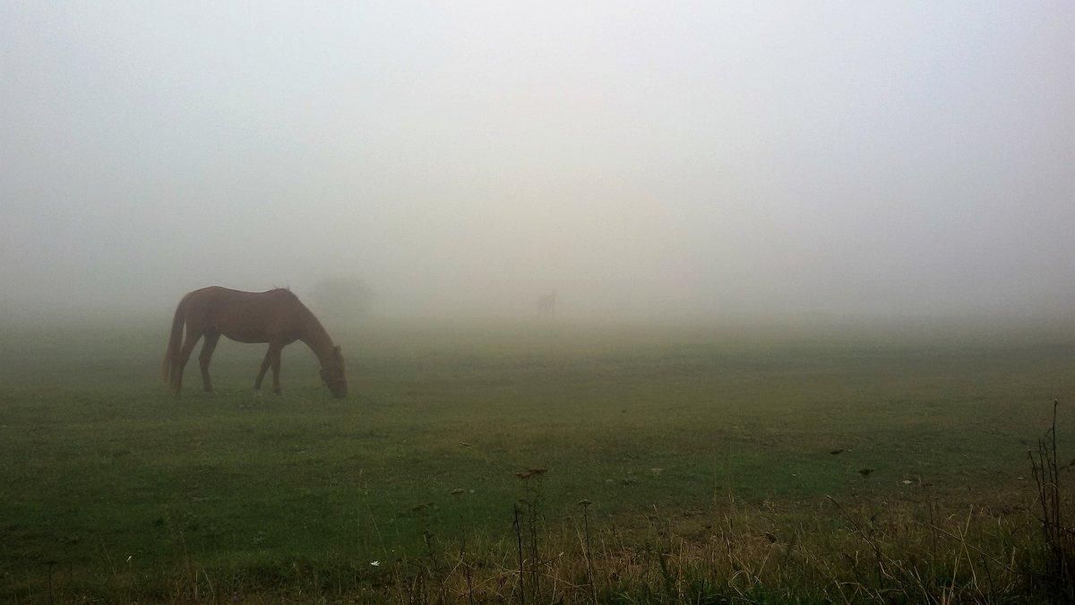в тумане - Александр Крупин
