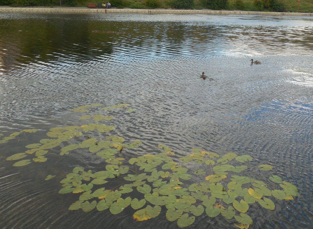 Осенний пруд - Мила