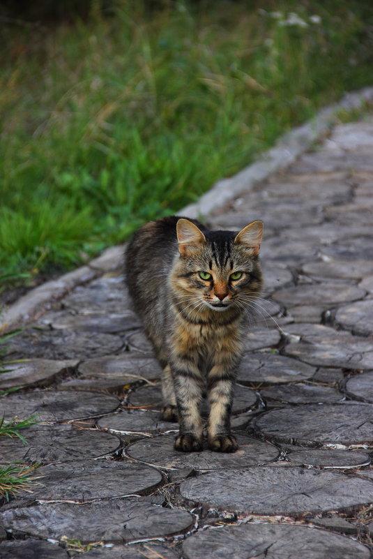 кот который гуляет сам по себе - Владимир