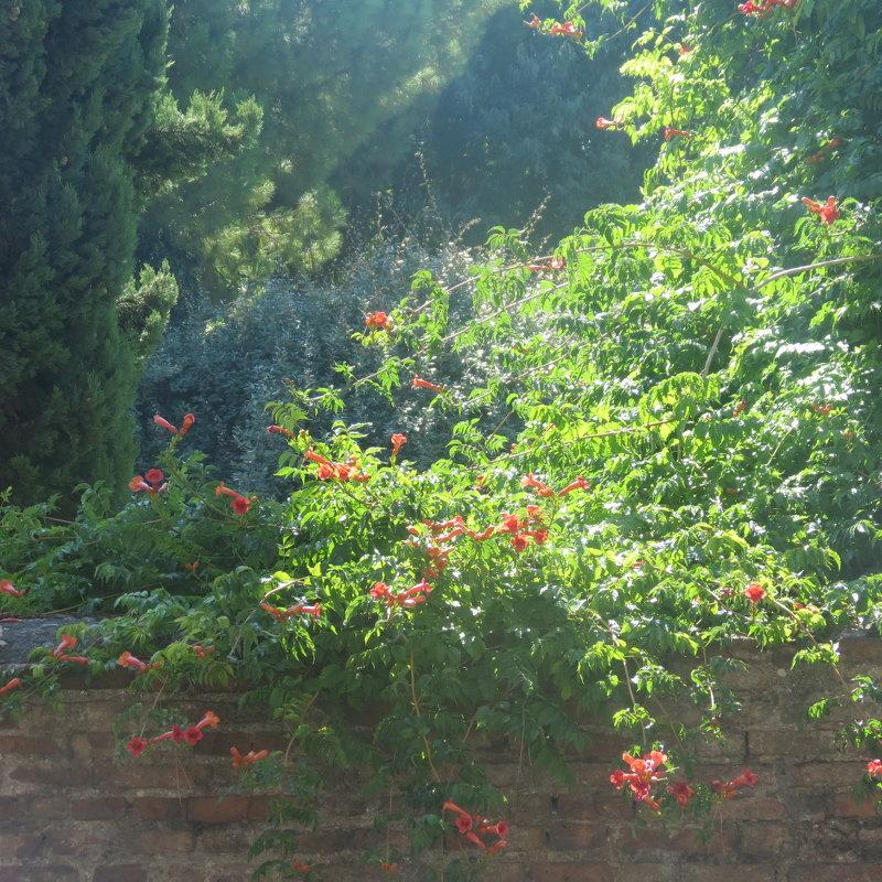 Цветы Римини - Людмила