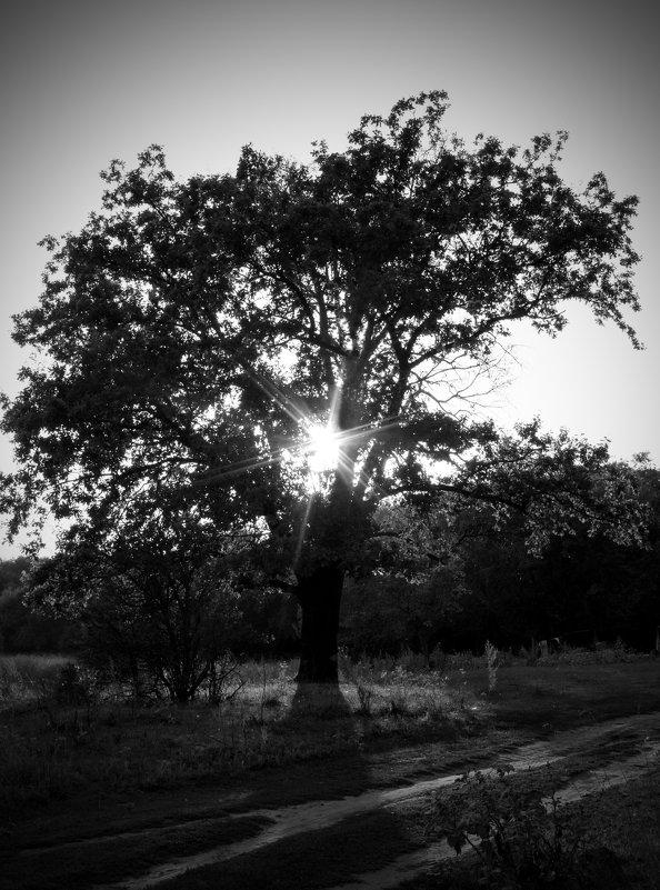 Дерево - Виктория Адамовская-Багрий