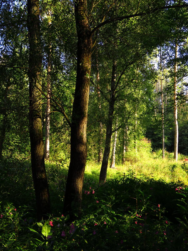 Сентябрь в лесу - Андрей Лукьянов