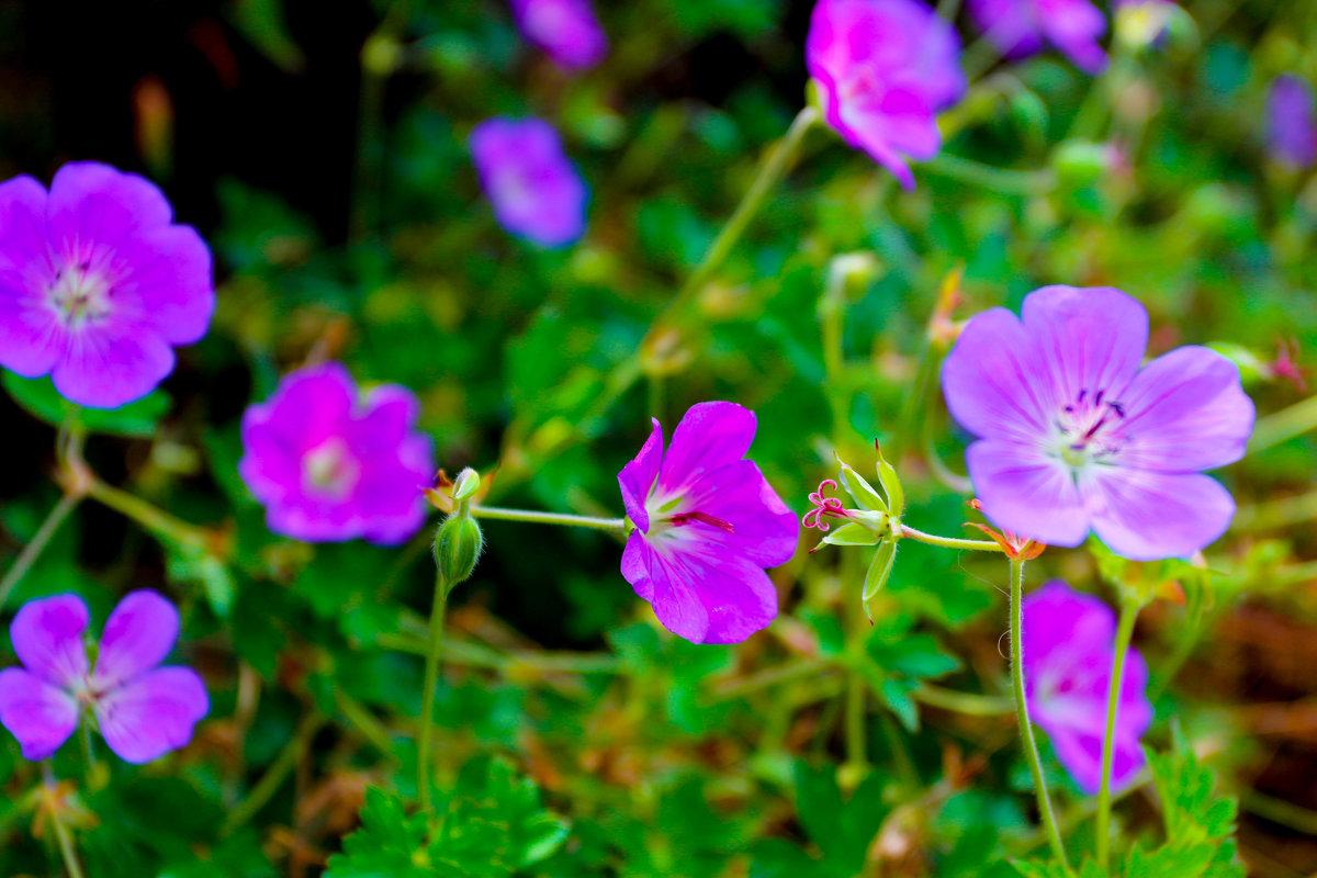 в цвете - Ирина ...............