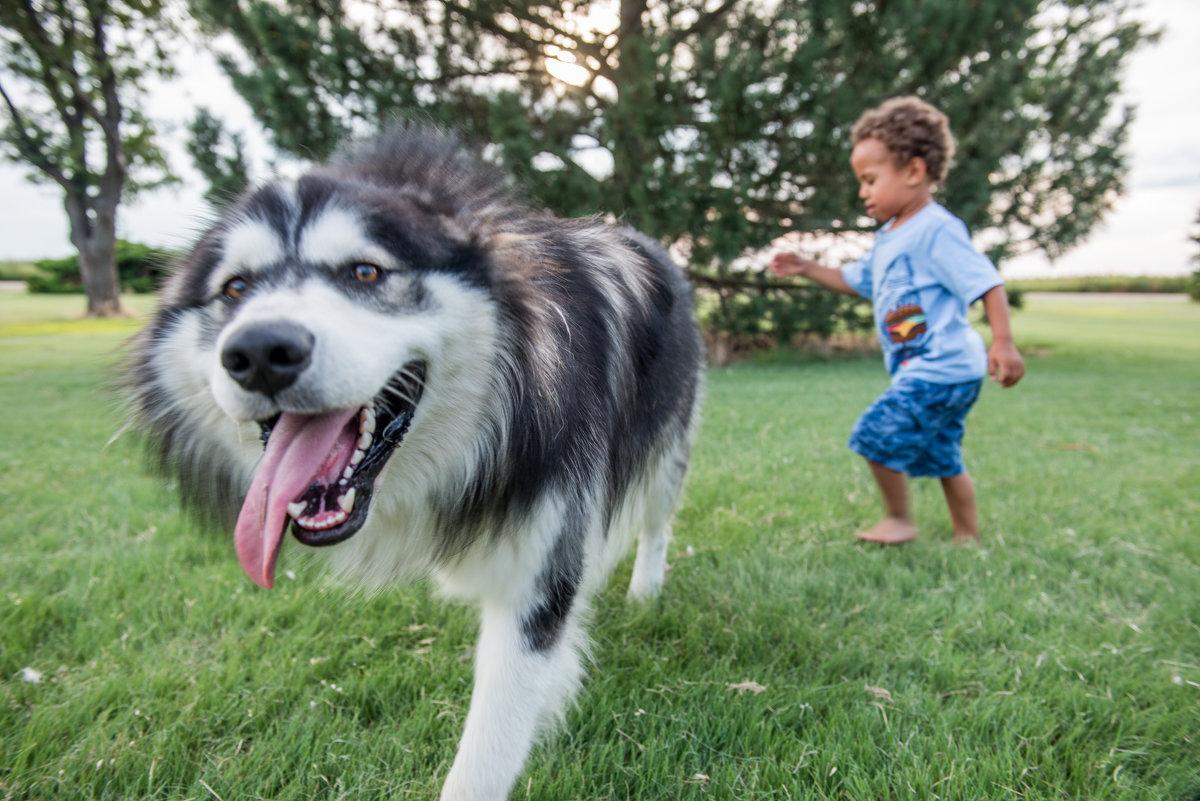 Рейдер и собака по прозвищу Волк - MVMarina