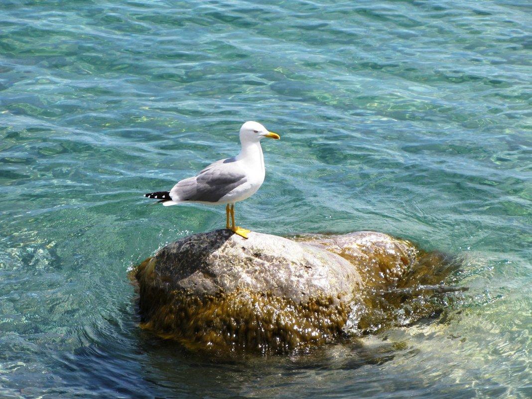 Подруга моря - Ольга Иргит