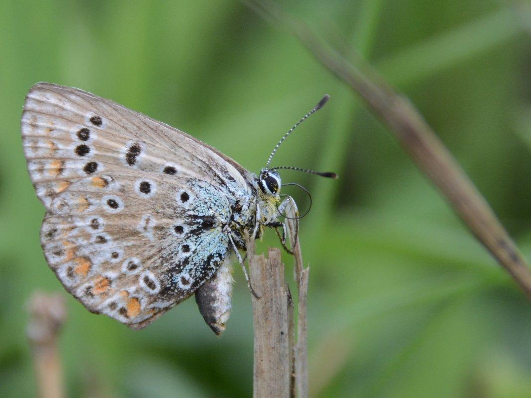 Бабочка - Руслан