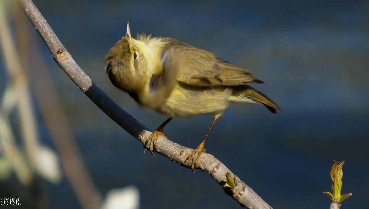 Почему-то вертишейкой зовут другую птицу - Павел Руденко