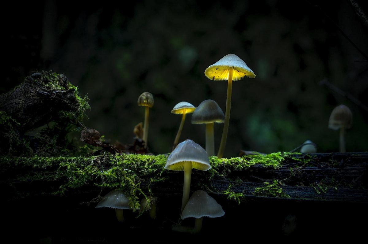 Волшебные поганки - Алексей Строганов