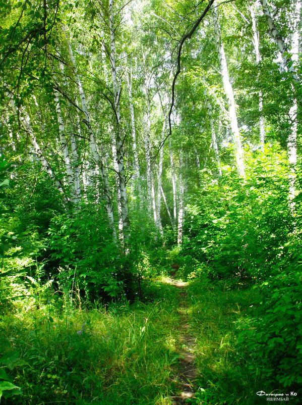 В Берёзовом лесу - Вячеслав Баширов