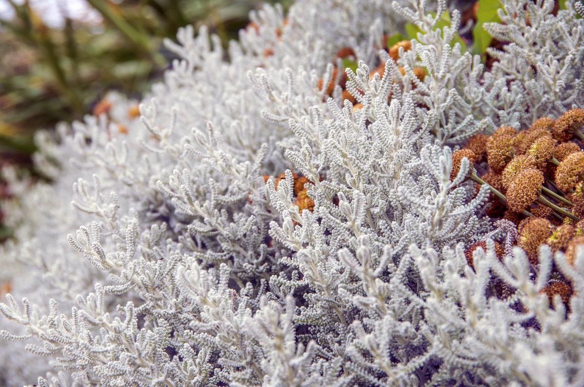 Зимний сад летом - Constantine