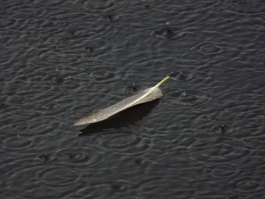 Потому что на улице - дождь - Андрей Лукьянов
