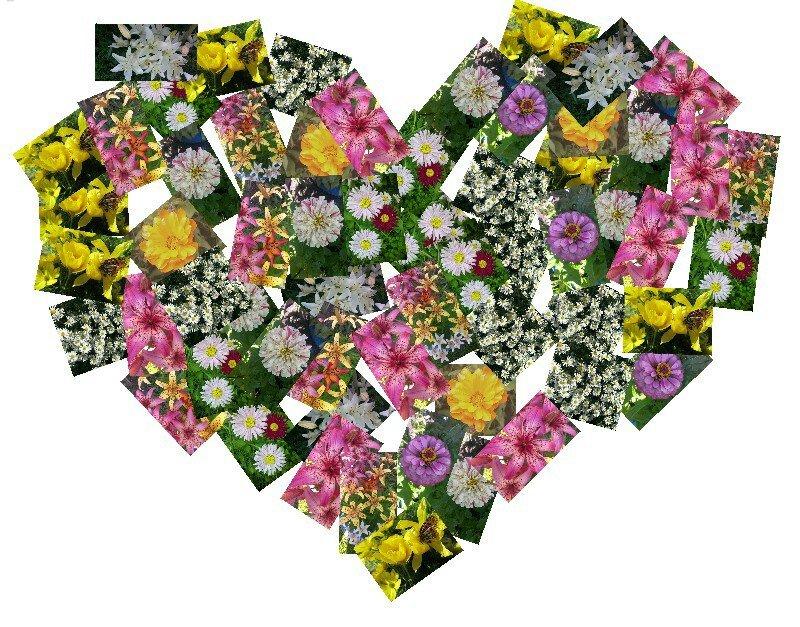 Люблю цветы - Елена *