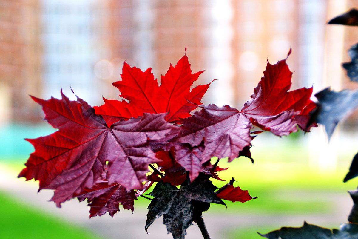 Люблю осень за ее краски - Сергей F